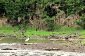 Manaus, Brazil 225