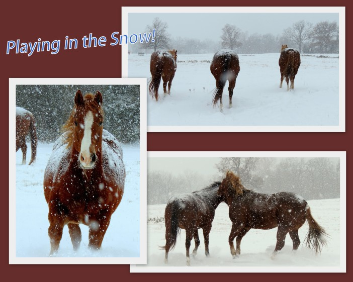 I took these pictures this morning of my babies--my big babies.  The snow is coming down too heavily now to get good images.