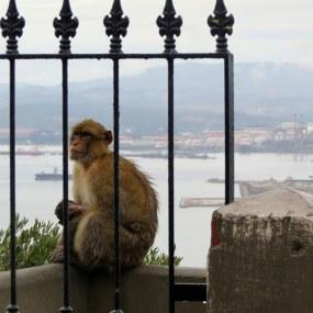 Gibraltar, United Kingtom 096